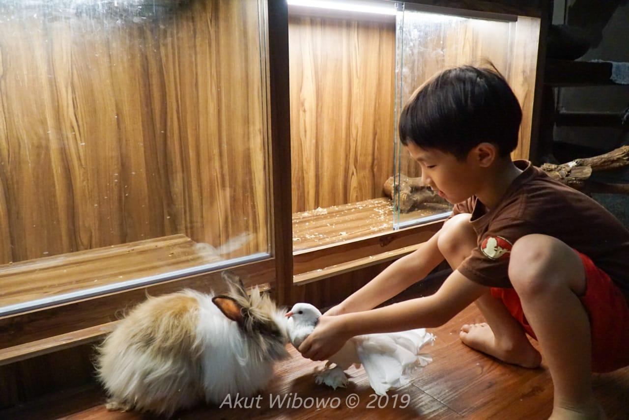 Bermain dengan binatang